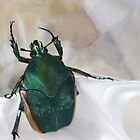 Green Beetle and Reflection by TheBluePlanet
