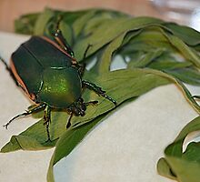 Green Beetle with Plants by TheBluePlanet