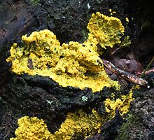Scrambled Egg Slime Mold (Fuligo septica) by ChuckBuckner