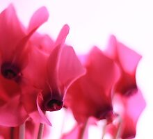 softly pink by natalie angus