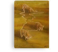 Three calves Canvas Print