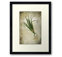 Spring Onions Framed Print