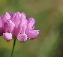 Iowa Pink! by aprilann