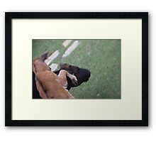 Bull Fight Framed Print