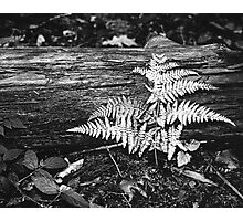 flash of light in the woods Photographic Print