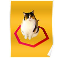 cat trap Poster