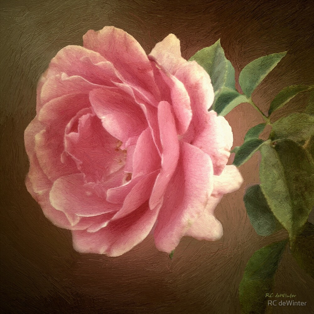 The Blush of Innocence by RC deWinter