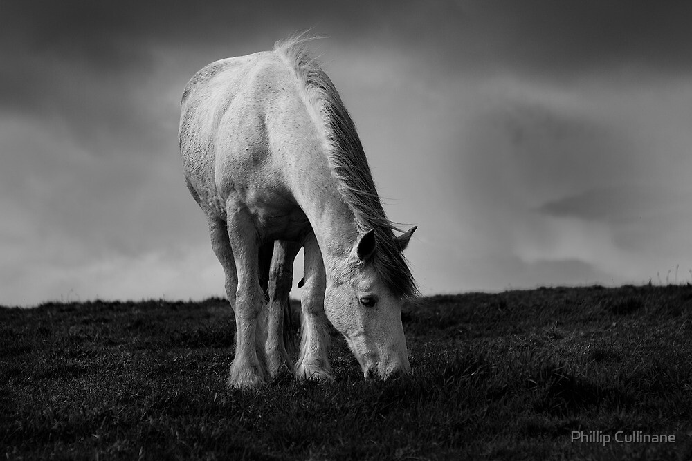 Pegasus by Phillip Cullinane