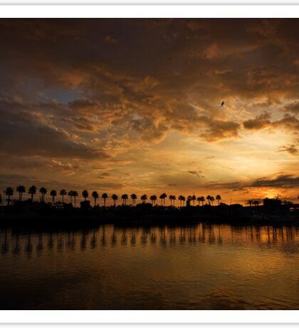 Sunset Palms at Rainbow Harbor Sticker