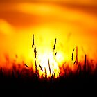 Fire in the Sky by Amanda Reed