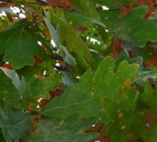 Oak Leaves Sticker