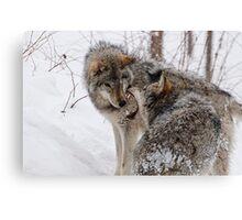 Timberwolves -  Montebello, PQ Canvas Print