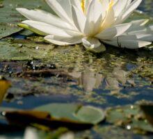 Water lily - Chaffey's Locks, Ontario Sticker