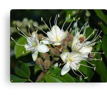 Blossoms Of A Jungle Tree - Flores De Un Arbol De La Selva Canvas Print