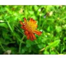 Loney little flower Photographic Print
