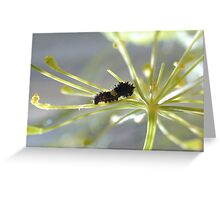 Easter Black Swallowtail Baby Greeting Card