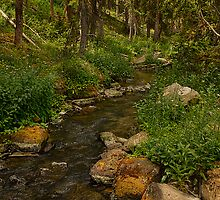 Trickle creek by HDRnovice