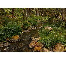 Trickle creek Photographic Print