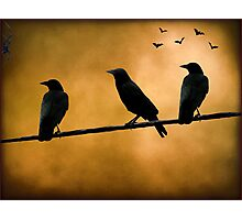 Crows on a Wire Photographic Print