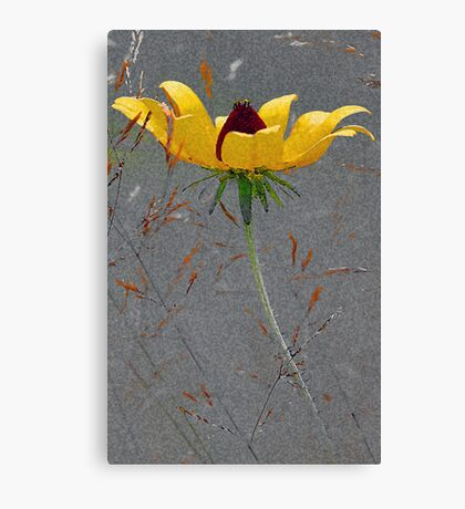 Black-Eyed-Susan -- Meadow Grass Canvas Print