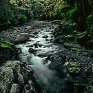 Fiordland National Park by Paul Mercer