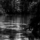 Black Muddy River© by walela