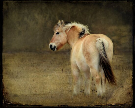 Rainy Day Pony~ by Renee Blake
