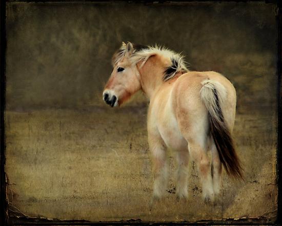 Rainy Day Pony~ by Renee Blake