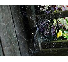 Web! Photographic Print