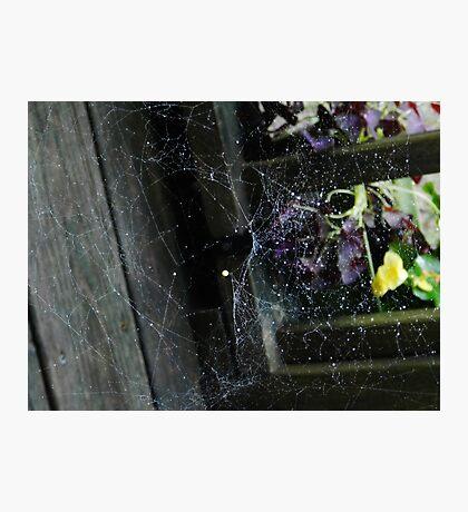 Web! Photographic Print
