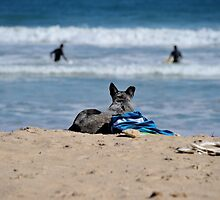 Blue Heeler at the Beach by Melanie Small