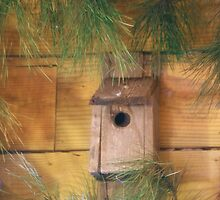 The birdhouse by jeanlphotos