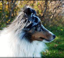 Autumn Profile by jodi payne