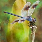 Blue Dragonfly at Lake Martin by Bonnie T.  Barry