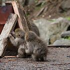 Baby Snow Monkey 猿ベビー by jeffreynelsd