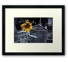 Dead Alive Framed Print