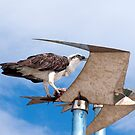 The Seagull and the Osprey by Nikki25