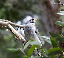 Miner Bird #1 - Newcastle by Daniel Rankmore
