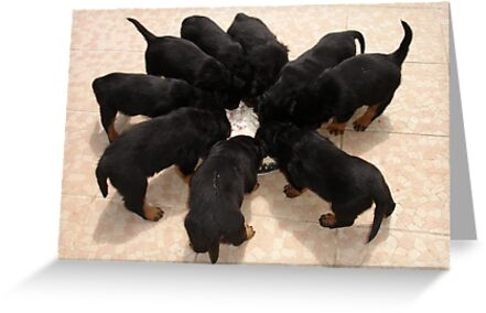 Nine Rottweiler Puppies Eating From One Food Bowl by taiche