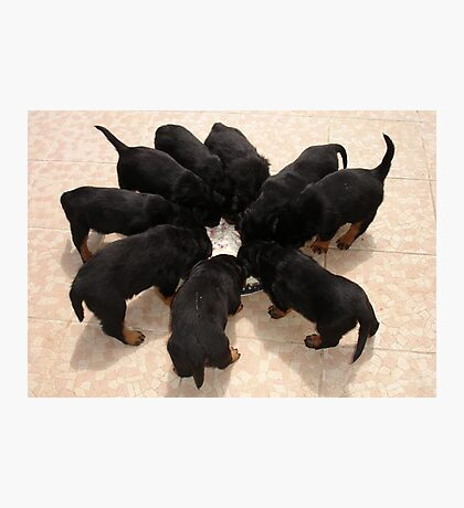 Nine Rottweiler Puppies Eating From One Food Bowl Photographic Print