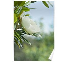 The Sweet Magnolia Tree Poster