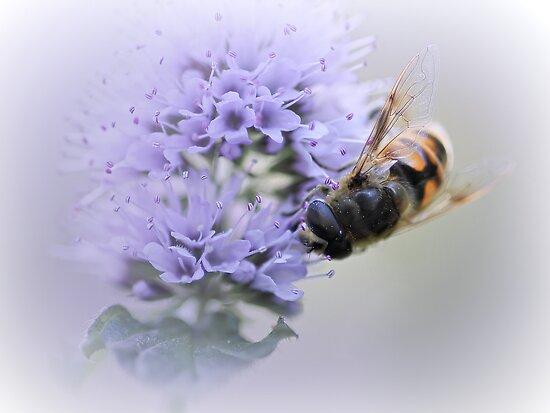 Striped buzz......... by Bob Daalder
