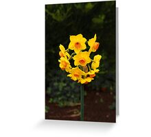 Dainty Daffs Greeting Card