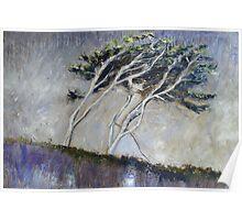Cornish Trees Poster