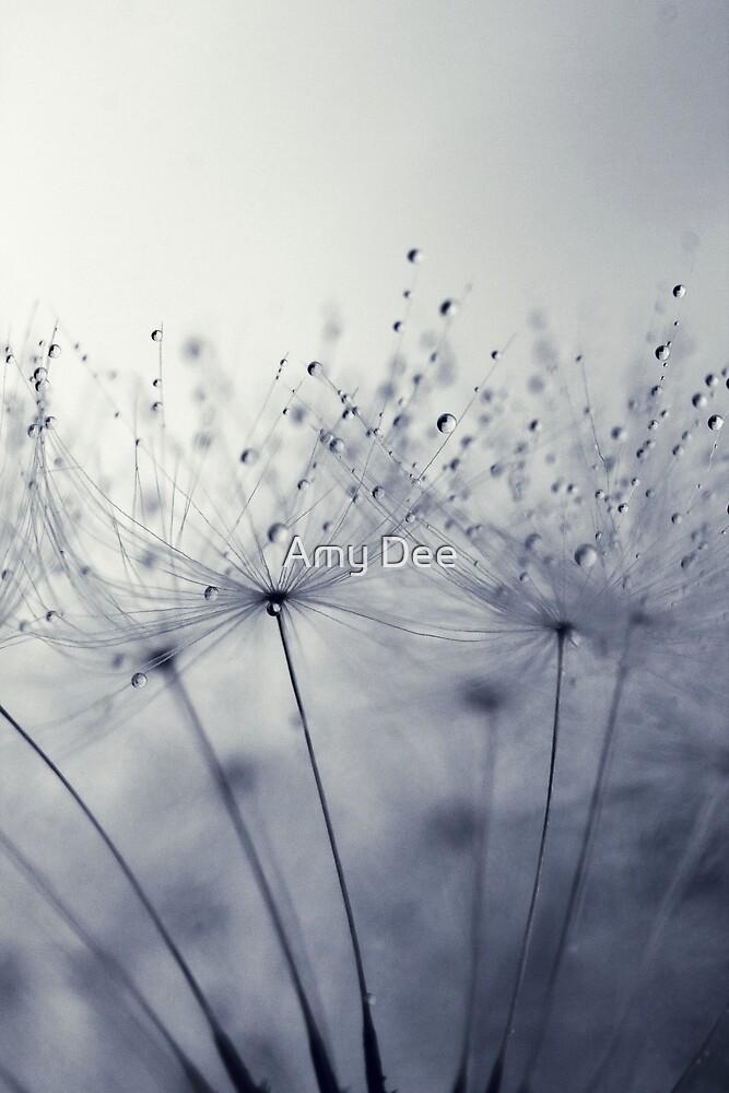 Dandelion Dust by Amy Dee