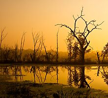 Brazos Bend Dawn by Paul Wolf