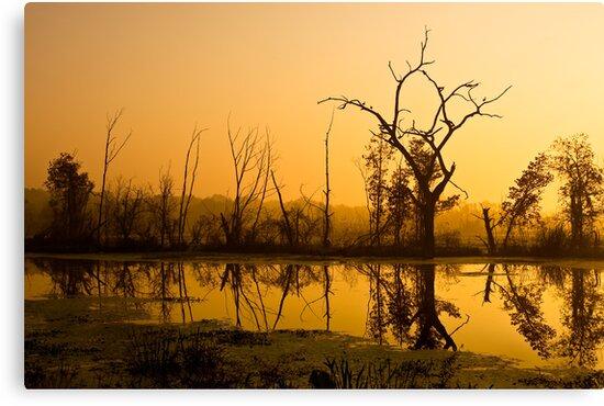 Brazos Bend Dawn by Paul Wolf