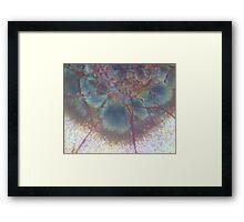 Bird Flower Framed Print