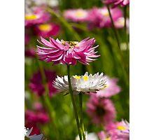 WA Wild Flowers Photographic Print