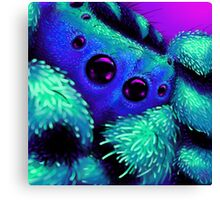 The Terrifying Peacock Spyider! Canvas Print